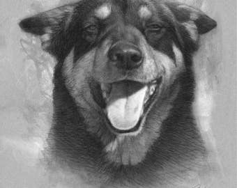Custom Pet Portrait Sketch - Realistic