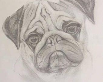 Graphite Pencil drawing  of Pug