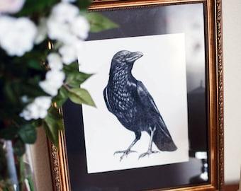 Crow Illustration - 8x10 Fine Art Print