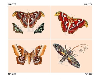 NA277-280 Artistic Ephemera Nature Print - One 8x10 or Two 5x7s - Colorful Moths and Butterflies, Butterfly, Papillons