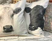 Black angus and white Charlois face pillow pair