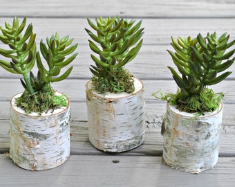 Succulent Planter - Birch Wood Planter - Faux Succulent - Succulent Arrangement - Faux Succulent Plant - Rustic Planter - Mothers Day Gift