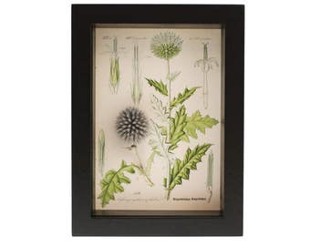 Preserved Flower Botanical Victorian Print Shadowbox