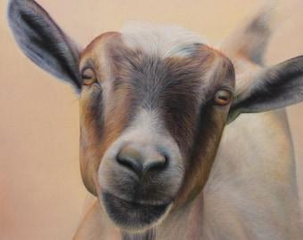 SAM DOLMAN Goat Animal Limited Edition Print