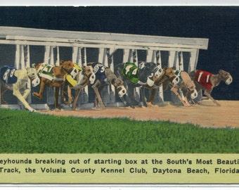Greyhound Dog Racing Starting Box Daytona Beach Florida 1951 linen postcard