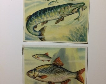2x Magnets with upcycled scrap illustrations, fishes! Pike and Perch