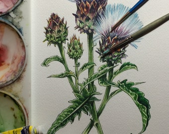 Thistle or...ornamental artichoke?!