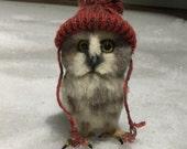 Saw Whet Owl *Reserved for Scott*