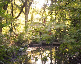 Golden Light - Fine Art Photograph, Leaves, Nature, Garden Photography, Reflections