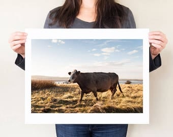 Brown cow photography print. Cow artwork gift, farm animal artwork, agriculture decor. Pastoral landscape photograph, English countryside