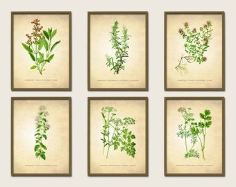 Herbs Antique Botanical Print Set of 6, Vintage Botanical Prints, Kitchen Decor, Herb Pictures Set of 6, Six Herb Print Set, Choose Any Size