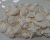 24 White PEARL FINISH  Fondant Seashells - Cupcake Decorations, Cookies or Cakes. White shimmer wedding seashells