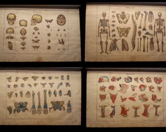 Antique 1841 Large Anatomy Book with Color Lithographs Anatomical Medical Text