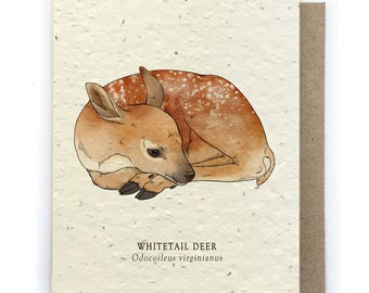 Whitetail Deer Greeting Card - Plantable Seed Paper - Blank Inside