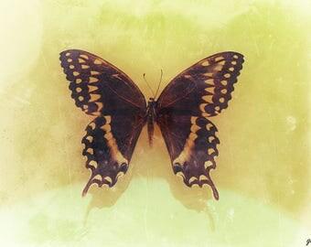 Butterfly Display Dark Art Photo