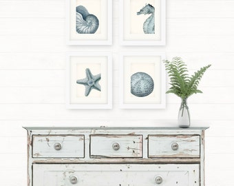 Set of Four Coastal Decor Sea Shell Illustrations in French Blue Nautical Beach Style Giclee Prints 5x7