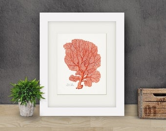 Coastal Decor Venus Fan  Sea Coral Natural History Giclee Art Print 8x10 Coral