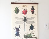 Vintage Illustration Insects Bugs with Magnetic Poster Holder - Walnut Insect Artwork Bug Print Hanger Wooden Poster Hanging Photo Frame