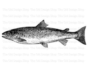 Printable Salmon Clip Art Vintage Fish Illustration Digital Download Transfer Image PNG JPG Formats