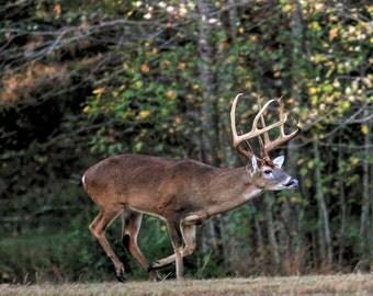 Whitetail Buck 5