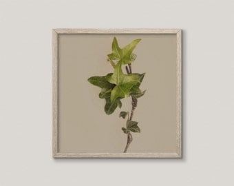 NATURE WATCH NO.4 | Macro botanical photo | modern plant home decor | green and taupe, grey | nature art print | minimalist botanical decor