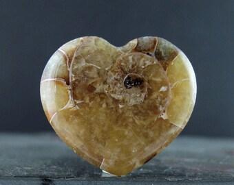 Beautiful  Heart shape  Natural Madagascar Ammonite, Fossil ammonite, Flat back,  Jewelry making supplies S7598