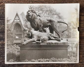 Original Vintage Photograph Big Cat Family
