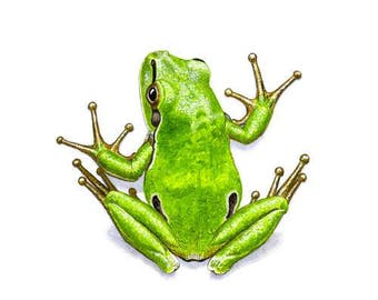 Signed tree frog print - small (HA04)