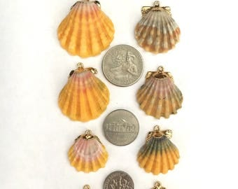 Your Choice - Sunrise or Moonrise Shell 18 kt Gold Dip Necklace