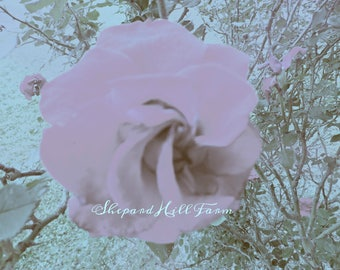 Rose Blossom Art DIGITAL Download Styled Stock Photography Shabby Chic Rustic Woodlands Nature Mockup Background COMMERCIAL LICENSE