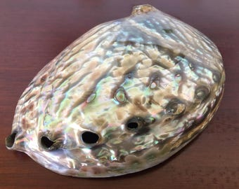 Polished Green Abalone Shell