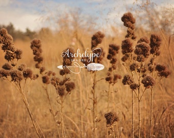 Digital Download Photograph {Sweet Tea} Country Photograhpy Still Life Nature