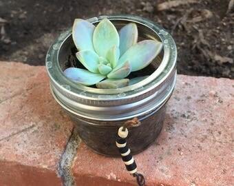 Mason Jar Sedum Succulent -Bluish
