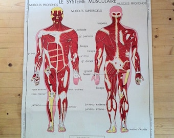 Large French School double-sided poster - muscles, nervous system