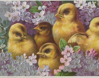 1910 Easter Postcard Featuring Five Hatchling Chicks  in a Sea of Purple Sweet Pea Flowers