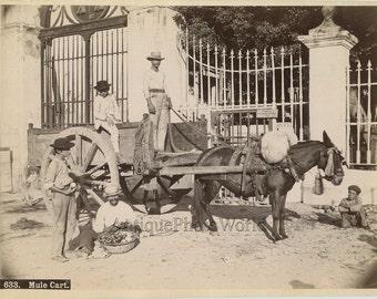Cuba farmers on mule cart antique ethnic albumen photo