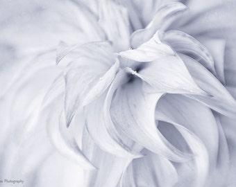 Black and White Photography Print, Minimalist Art Bedroom Wall Decor, Modern Home Decor Print, Dahlia Photographic Print