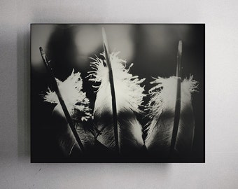 Black and White Feather Photography Still Life Fine Art Photography Black and White Shabby Chic Decor Farmhouse Decor Large Monochrome Art