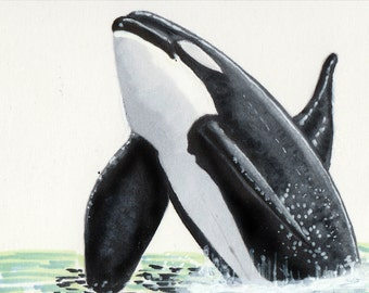 Breaching bull orca - sketchcard/ACEO