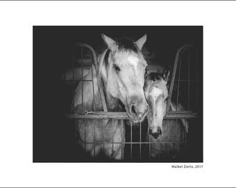 Fine Art Photography Print, HORSES, Prints, Black and white, Home Decor, Wall Art, Modern, Animal