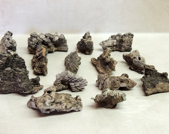 """15 pieces of Hackberry Tree Bark size 1"""" -  1 3/4"""" Crafting, Woodland Forest decor, Natural History, Oddities, Homeschooling, Educational"""