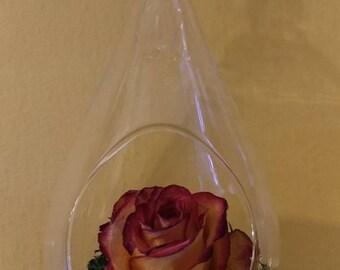 Preserved rose in teardrop hanging globe