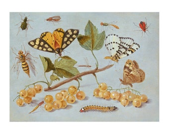 Butterfly and Insects, Flemish Oil Painting Print