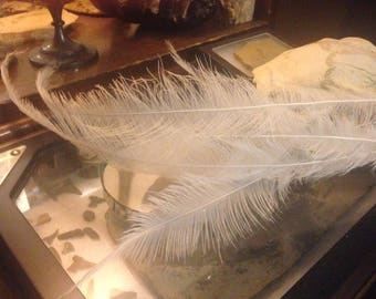 Rare, White Rhea Feathers, Cruelty Free, naturally dropped- Lot of 10