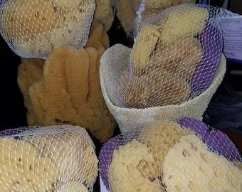 Wholesale Craft Sponges, Bagged Sponges, Finger Sponge, Dead Sea Sponge, Body Sponge, Bath Sponge, Craft, Sponges, Sponge, Wholesale Sponges