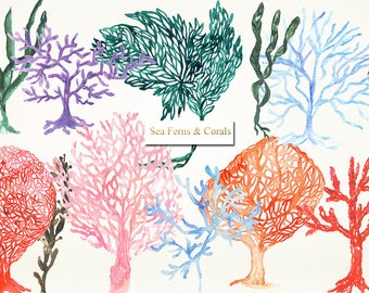 Sea fern and corals watercolour clipart. Underwater life hand draw watercolour illustrations. watercolor clip art.
