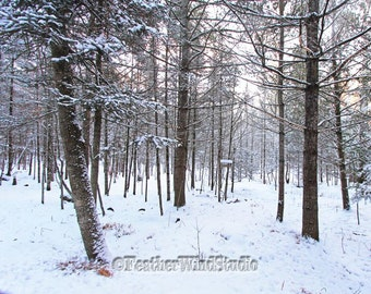 Northern Michigan Landscape Photography | Winter Spruce Fir Pine Trees | Snowy Wilderness Scenery | Evergreen Trees | Winter Forest Print