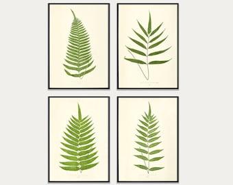 Fern Print Set, Fern Prints set of 4, set of 4 fern prints, Botanical Print Set, Botanical Art print set, Fern Prints, Set of antique ferns