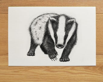 Badger illustration. Badger artwork. Black and white art. Badger print. Wildlife art. Animal illustration. Black Indian ink.