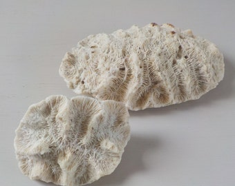 Natural Found Coral Heads • Beach Found Coral • White Ivory Coral Pieces
